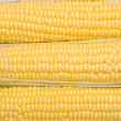 Background from the cob of corn - Stock Photo