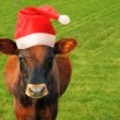 Cow in Santas hat. — Stock Photo