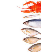 Assorted fish on white background with place for text — Stock Photo