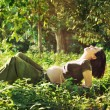 Pregnant woman laying on grass in park. — Stock Photo #42742427