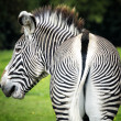 Does my bum look big in stripes — Stock Photo