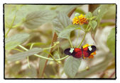 Butterfly and leaves — Stock Photo
