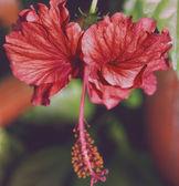 Fiore rosso — Foto Stock