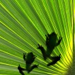 Frogs on leaf — Stock Photo
