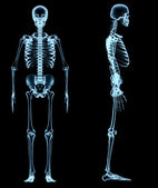 Human skeleton under the x-rays — Foto Stock
