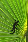 Lizard on leaf — Stock Photo