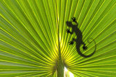 Lizard on leaf — Stock Photo