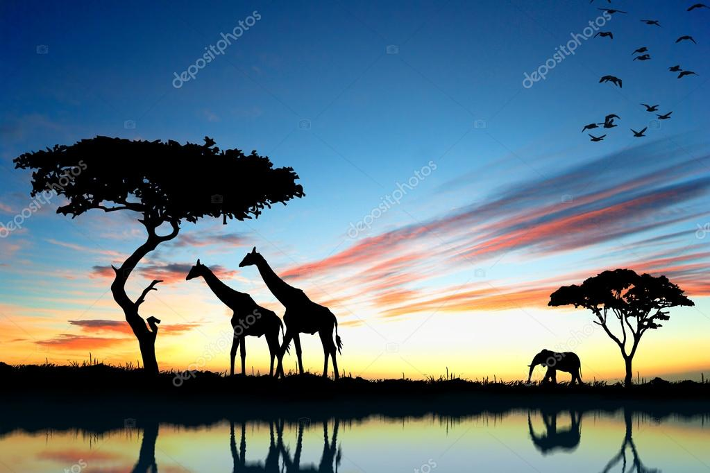 Safari in Africa. Silhouette of wild animals reflection in water.  Stock Photo #13890331