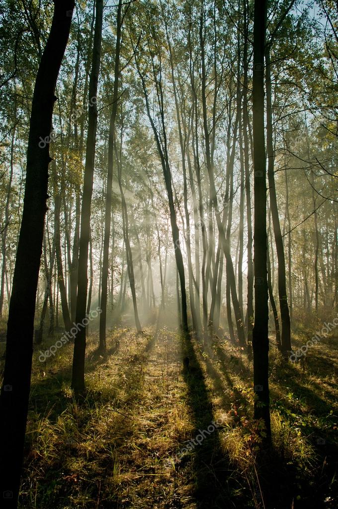 Beautiful morning scene in the forest with sun rays and long shadows  — Stock Photo #16870709