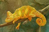Gele kameleon op tak close-up — Stockfoto