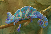 Blue chameleon on branch closeup — Stock Photo