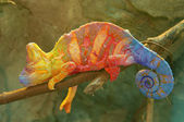 Kameleon op tak — Stockfoto