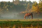 Cavalo no prado de nevoeiro na manhã — Fotografia Stock