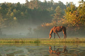 Horse on fog meadow in morning reflected in the water — Stock Photo