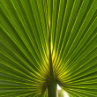 Abstract image of Green Palm - Stock Photo