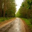Forest road after rain. - Stock Photo