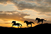 Galloping wild horses. Horse silhouette against the sky. — Stock Photo