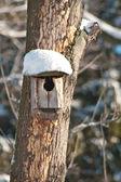 Bird house. Booth breeding on tree — Stock Photo