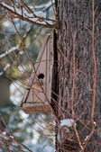 Bird house. Booth breeding on tree — Stock Photo