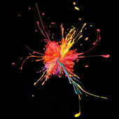 Colorful paint splashing on black. — Stock Photo
