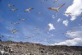 The Birds — Stock Photo