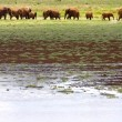 Elephants on the Horizon, Kenya, Africa — Stock Photo