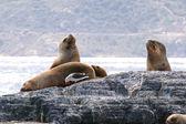 Sea Lion & Sea birds in Beagle channel, Tierra del Fuego, Patagonia — Stock Photo