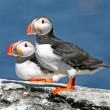 Pair of puffins standing on a rock, Iceland — Stock Photo