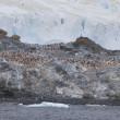 Stock Photo: Penguin Colony on South Shetland Islands, Antarctica