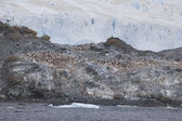 Penguin Colony on the South Shetland Islands, Antarctica — Stock Photo
