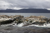 Southern Sea lions & Cormorants resting on the Islands of Tierra Del Fuego, Ushuaia, Argentina — Foto de Stock
