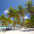 Stock Photo: Palm trees on beach of tropical BorBora, French Polynesia.