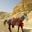 Stock Photo: Decorated horse at the entrance to the Siq, Petra, Jordan.