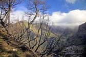 Eira do Serrado, with a view to Nun's Valley & the village of Curral das Freiras, Maderia, Portugal. — Stock Photo