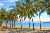 Palm tree lined beach front of Noumea, New Caledonia, South Pacific. — Stock Photo