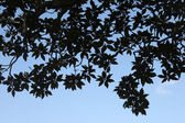 Silhouettes of leaves against the sky. — Foto Stock