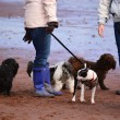 Dog walkers with wellies — Stock Photo