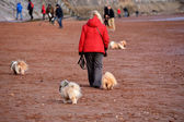 Woman in red anorak with dogs — Stock Photo