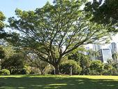 Brisbane City Park — Stock Photo