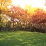 Park Lawn — Stock Photo #33548503