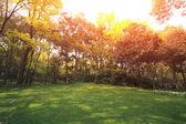 Park Lawn — Stock Photo