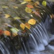 Brook deciduous — Stockfoto #36314161