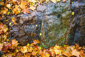 Maple rocks — Stockfoto