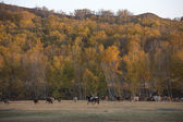Autumn grass pastures — Stock Photo