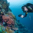 Diver on healthy reef — Stock Photo #13857025