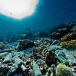 Stock Photo: Reef scape