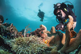 Diver on a healthy reef — Stock Photo