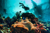Underwater reef scape — Stock Photo
