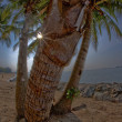 Palm tree on beach at night — Stock Photo #14008781