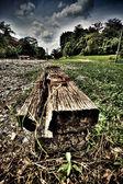雨林的结算 — 图库照片